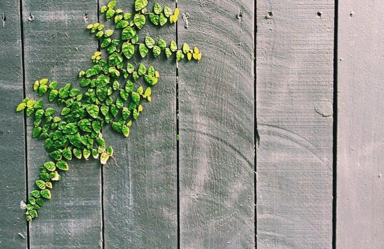 Haie végétale vs clôture végétale : quelles sont les différences ?